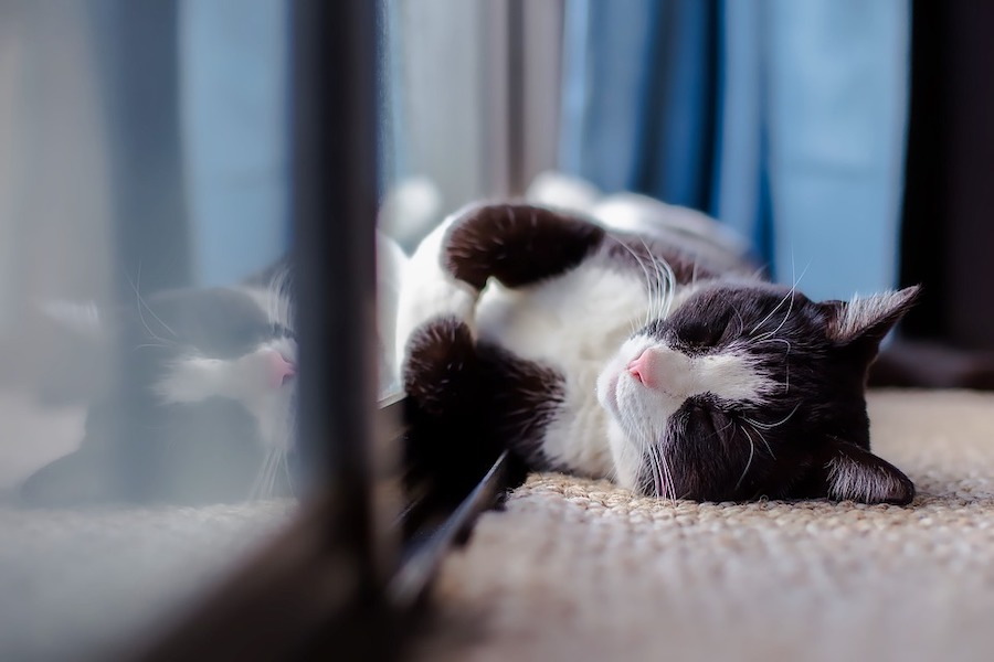 cat sleeping indoors