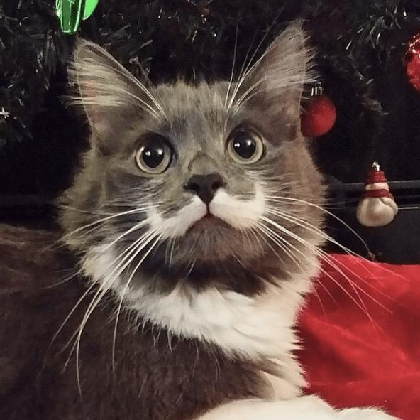 hamilton cat