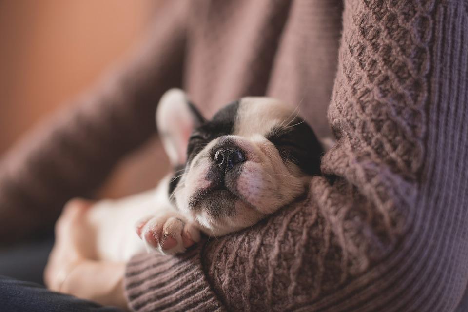 small puppy sleeping