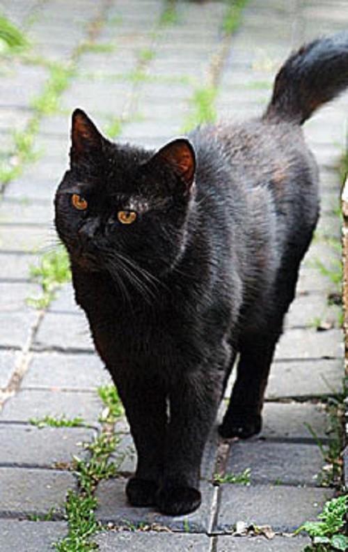 tinker cat