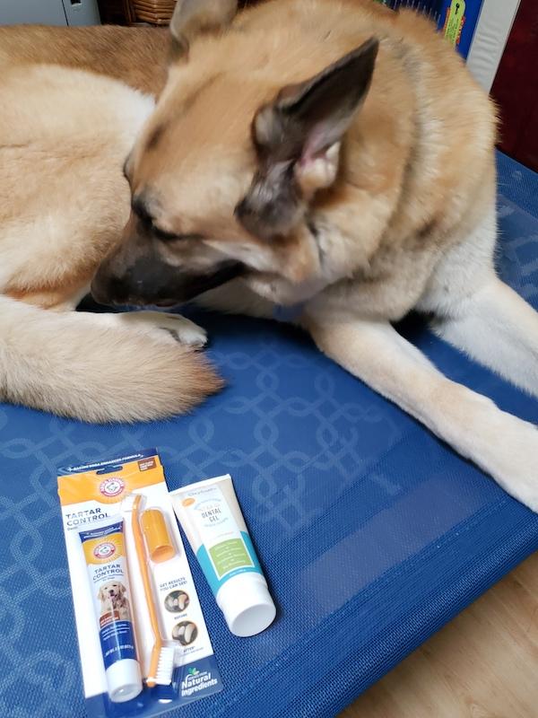 dog posing next to toothpaste tubes