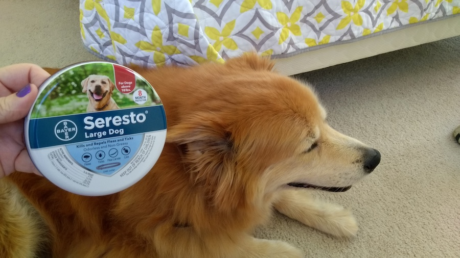 dog preparing for seresto flea collar review
