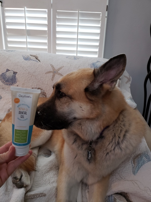 dog posing next to toothpaste