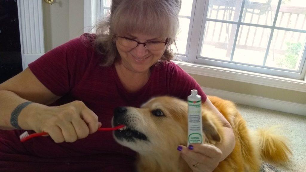 Vetoquinol dog toothpaste