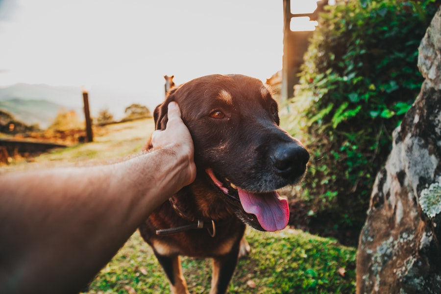 dog getting pet