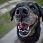 dog snout close up