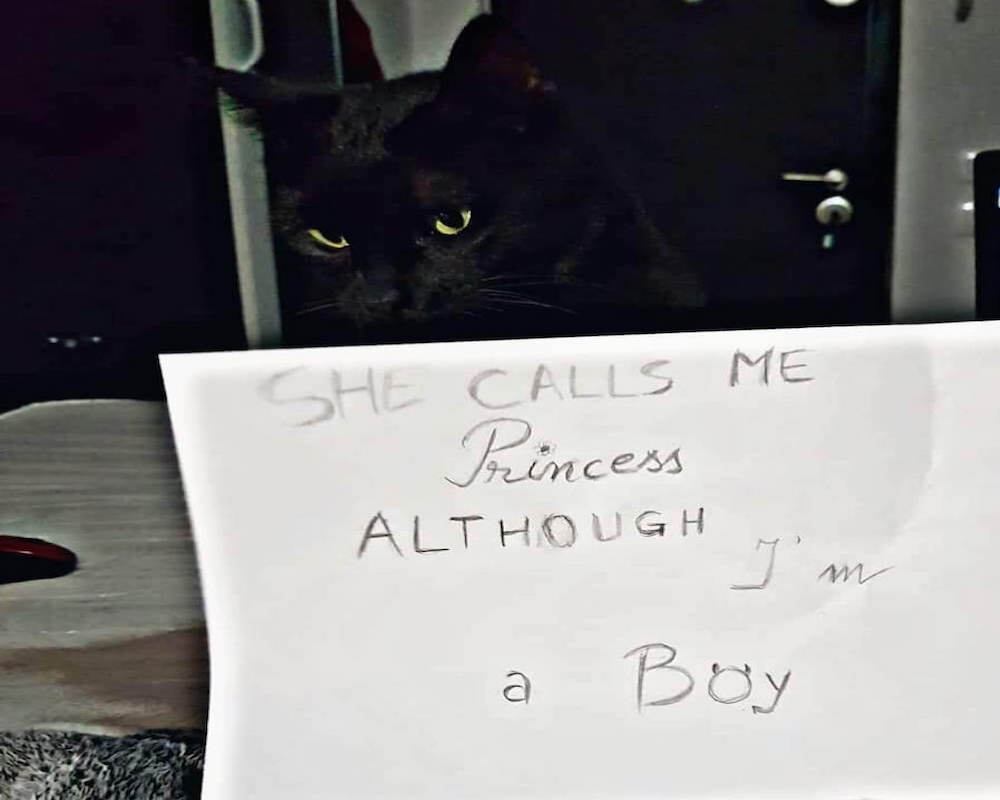 black cat shaming owner