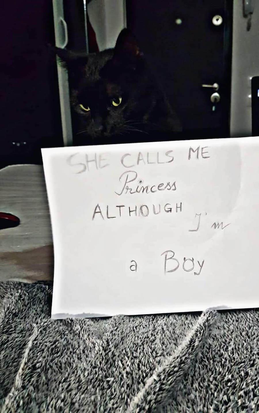 black cat next to paper
