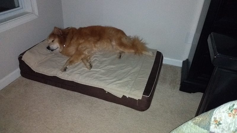 dog sleeping on kopeks dog bed