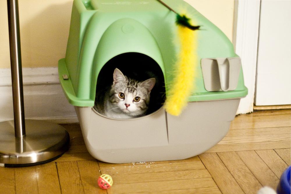 cat sitting in litter box
