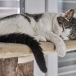 cat sleeping on cat tree