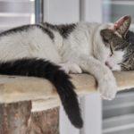 cat sleeping on cat tree