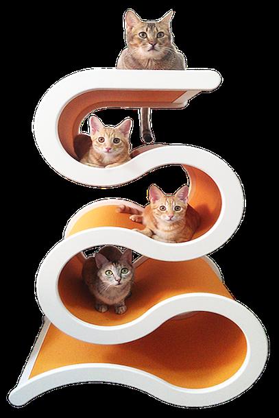 large cat condo