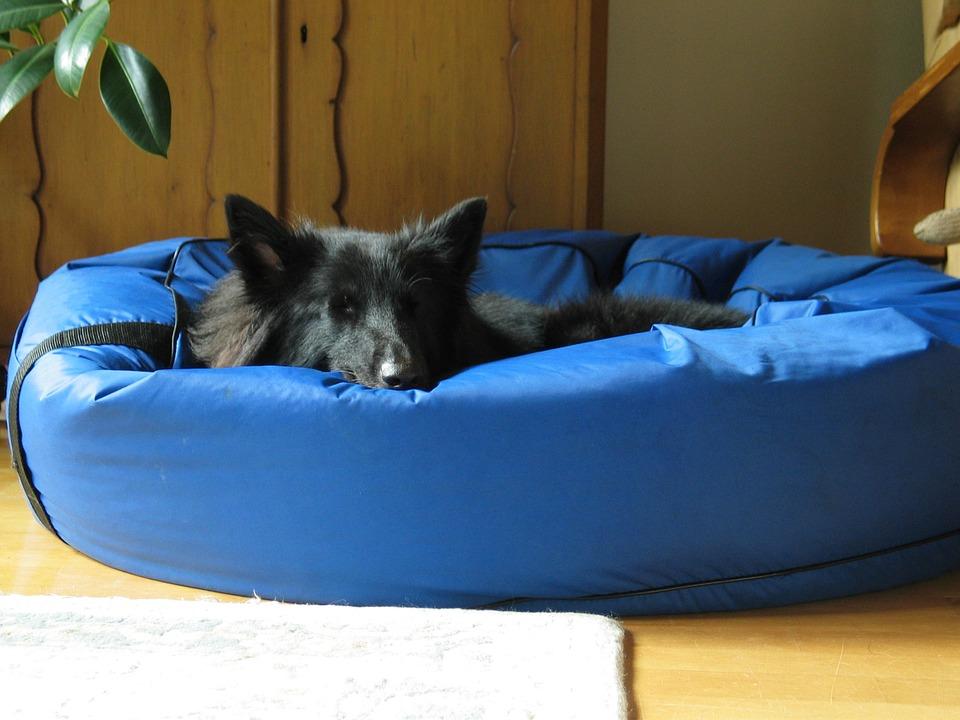 dog sleeping in dog bed