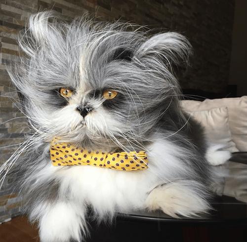 Atchoum famous cat