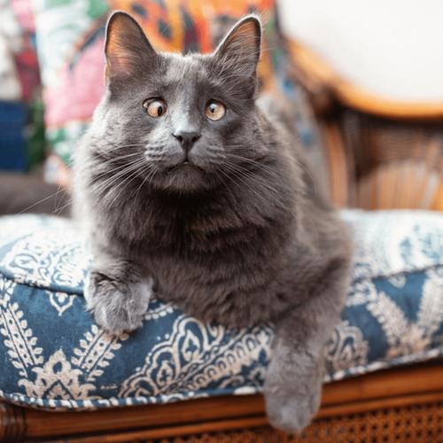 belarus famous cat