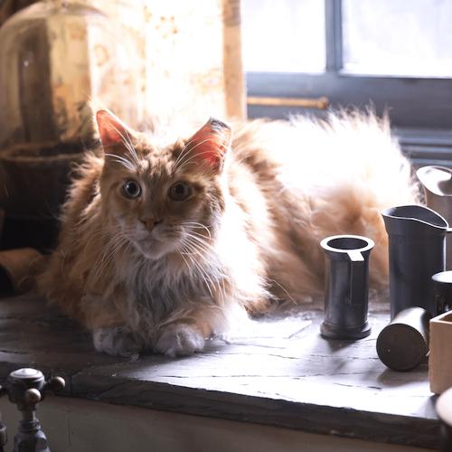 buttercup famous cat