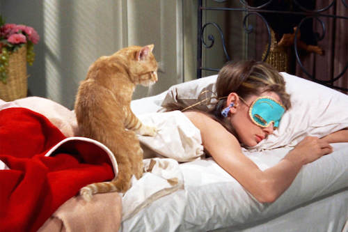 breakfast at tiffany's famous cat