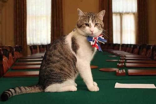 Chief Mouser to the Cabinet Office famous cat