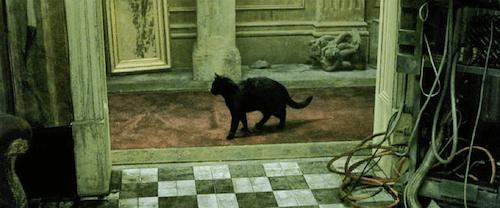 dejavu cat famous cat