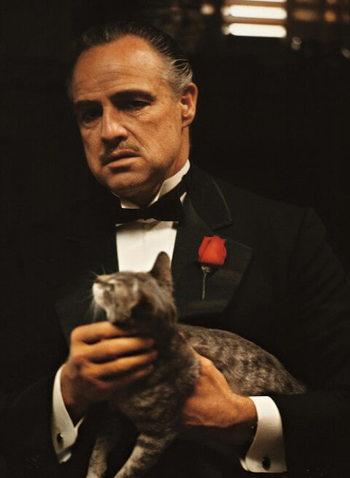 godfather famous cat