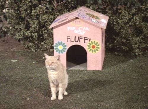 fluffy famous cat