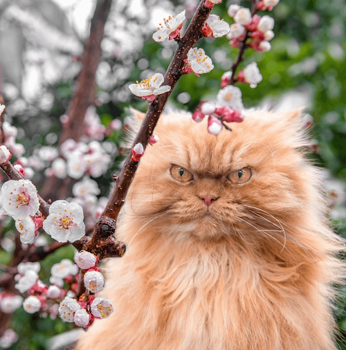 garfi famous cat
