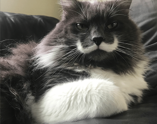 hamilton famous cat