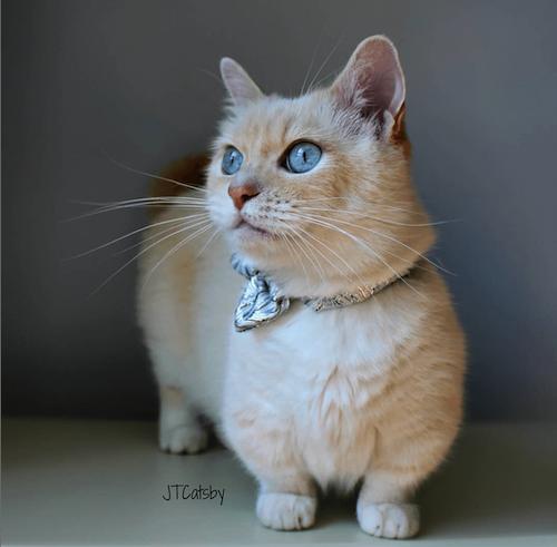 JT Catsby famous cat
