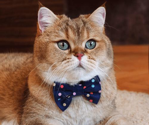 jupiter famous cat
