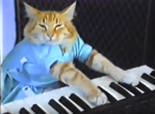 Keyboard famous Cat