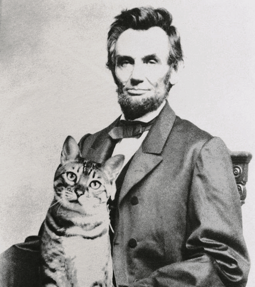 lincoln and his cat tabby