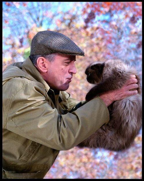 mr jinx famous cat