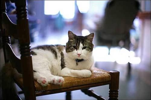 oscar famous cat