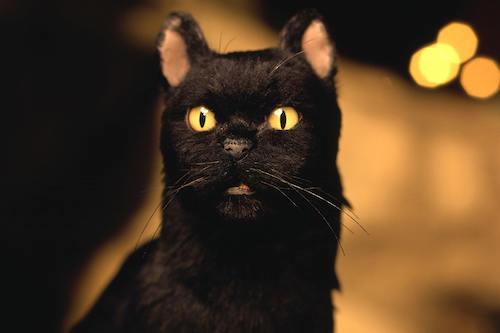 salem famous cat