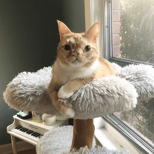 Smush famous cat