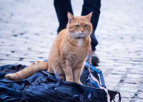 Street Cat Bob famous cat