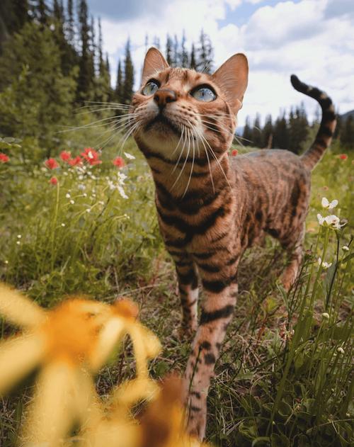 suki famous cat