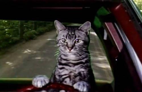 toonces famous cat