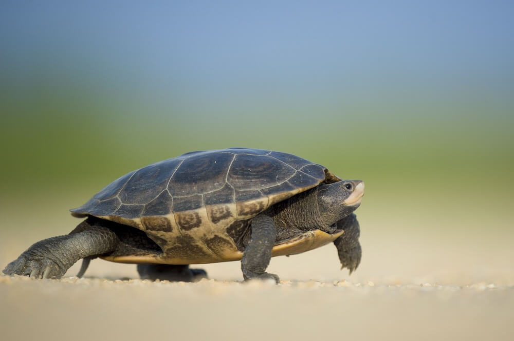 turtle outdoors