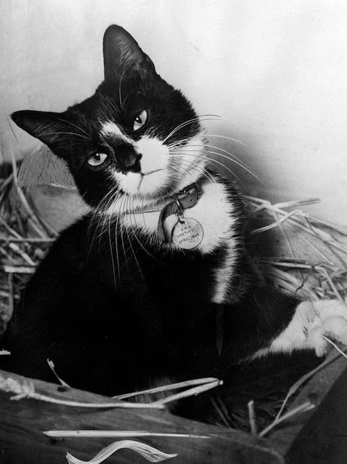 Unsinkable Sam famous cat