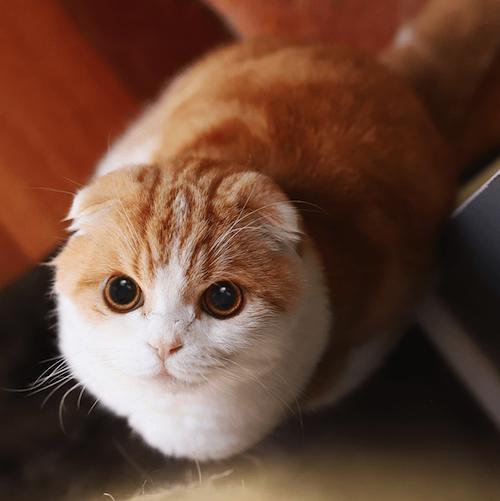 waffles famous cat