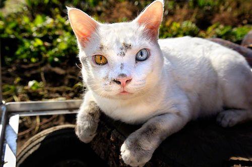 fukumaru famous cat