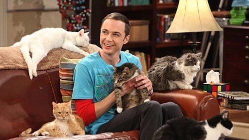 zazzles famous cat