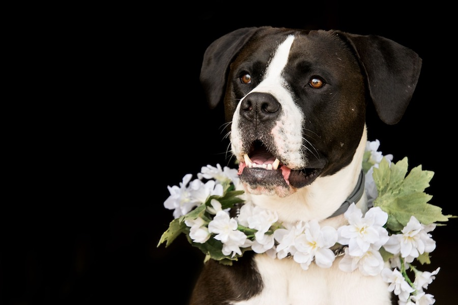 dog wearing flower collar