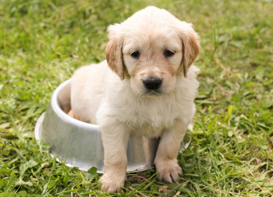 puppy in bowl