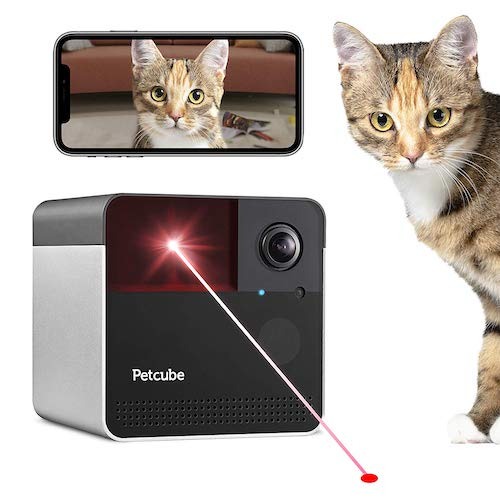 cat camera with laser
