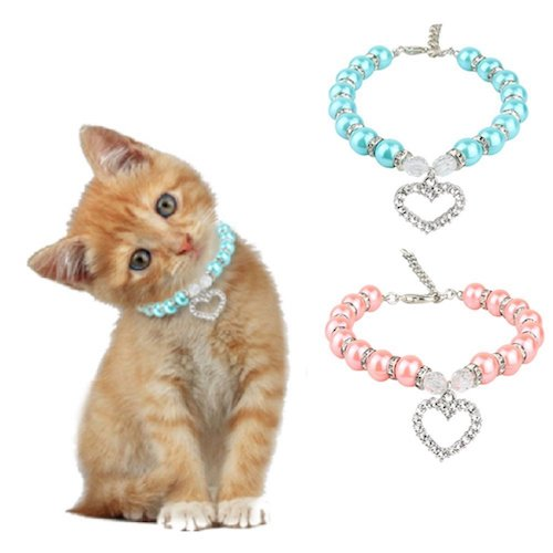 cat wearing necklace