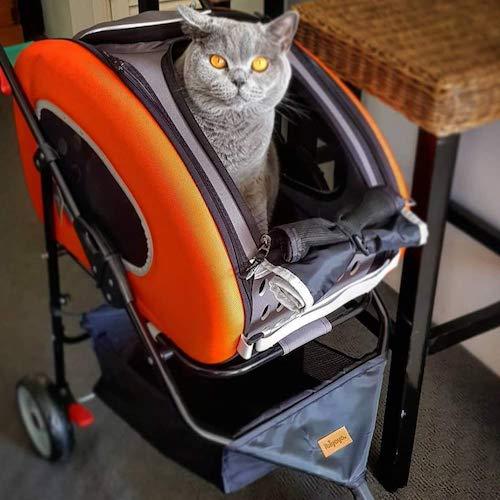 cat in stroller