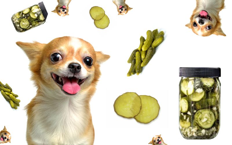 dogs and pickles